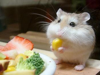 hamstereating.JPG